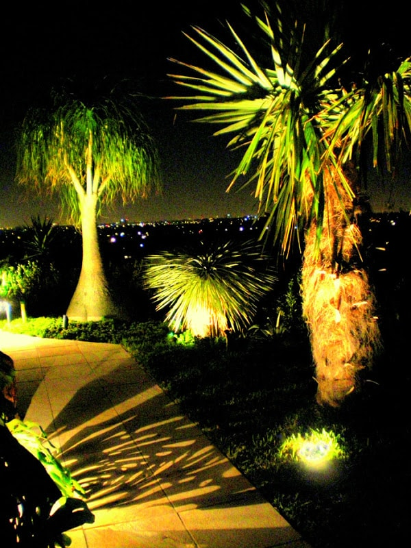 Shadow Lighting Solutions to Accent Trees