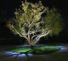5 Key Benefits of Low Voltage Landscape Lighting in Orange County 3