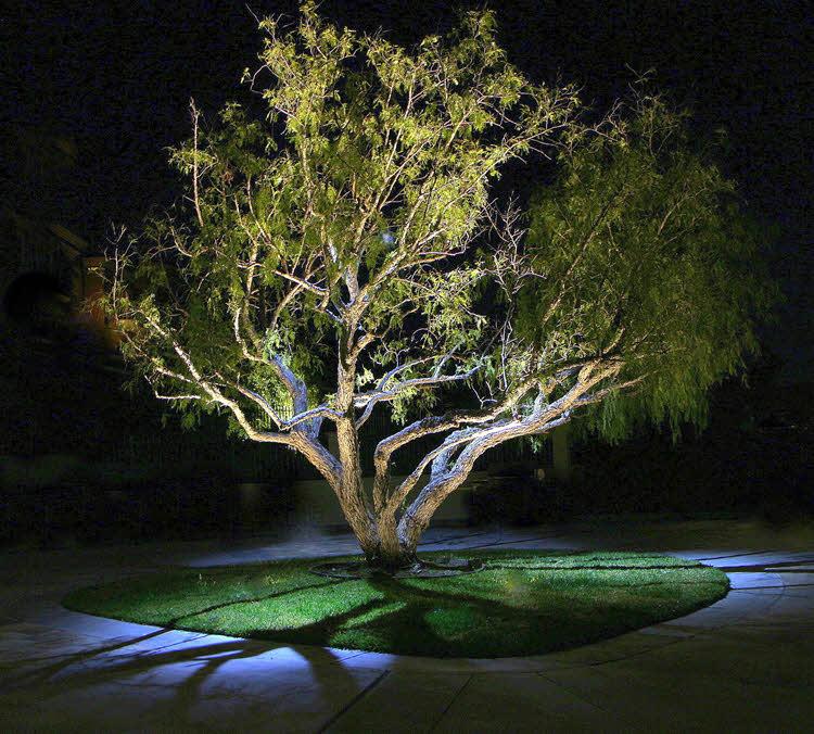 Moon Lighting a Tree