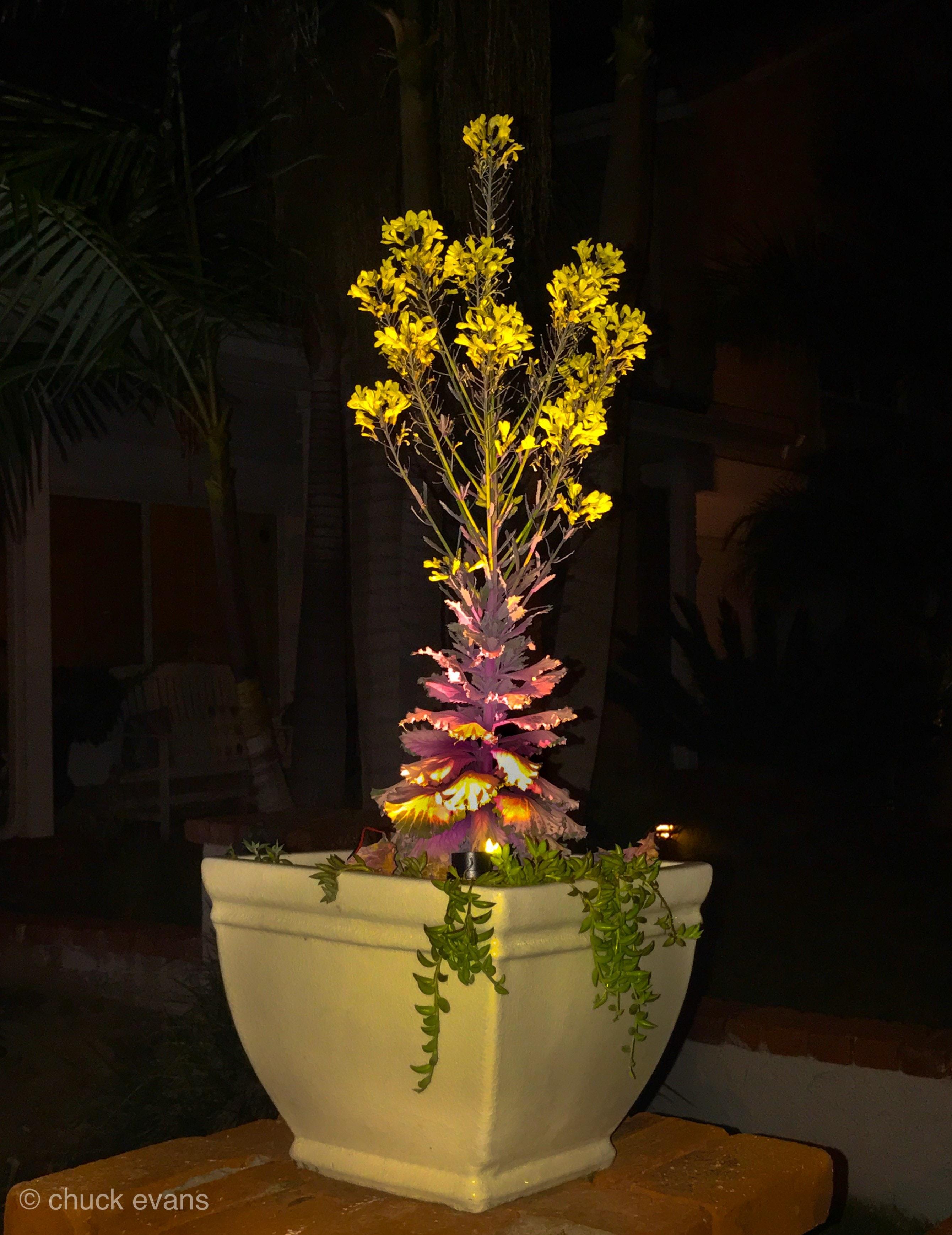 Pot Lighting 3